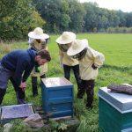 Obergruppen | Arbeiten und Wirtschaften | Bienenkasten