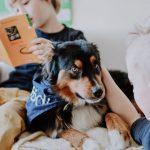 Gemeinschaftsschule | Aktiv Schule Erfurt | Schulhund Schrödi